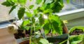 Plantor säljes