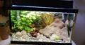 Akvarium ca 35 liter inkl fiskar
